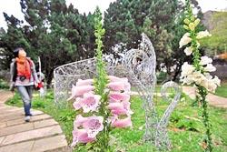 花卉試驗中心新景觀布置 (圖片來源:中國時報/攝影  黃國書)