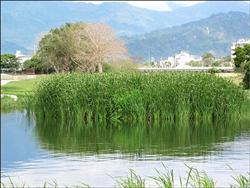 太平溪生態池 (圖片來源:自由時報/黃明堂)