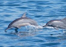 龜山島附近是賞鯨的熱門地點