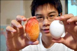 「雞蛋芒果」狀似雞蛋  (圖片來源:自由時報/記者  蔡清華 攝)