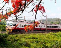 紅斑馬火車
