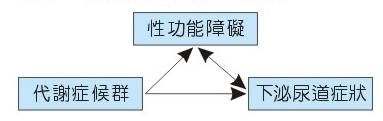 性功能、代謝症候群與下泌尿道症狀三角關係