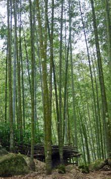 假日玩竹去吧~