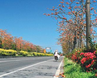 南台灣屏鵝公路兩旁木棉花開,預告春天來了。(圖片來源:陳永興)