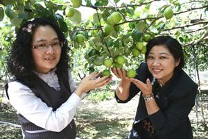 田寮鄉的棗子以網室栽種,不套袋,甜度較高。陳汶彬/攝影