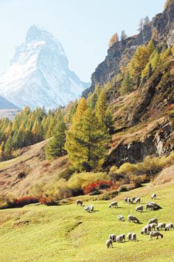 瑞士的湖光山色、高山雪景美得很不真實,歐洲的自然美景集中在這個比台灣大1.15倍的土地上,許多旅人想成為瑞士風景的一部分