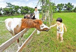 民宿旁邊有個迷你馬場,麻糬和小蘋果都會帶客人來餵食。