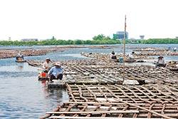 台江內海目前大多已經淤積,少數僅存海域,幾乎全部成為蚵架養殖區與釣客樂園。