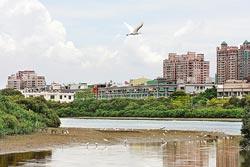 台江內海的淤積溼地,讓安平市區旁就有豐富生態。