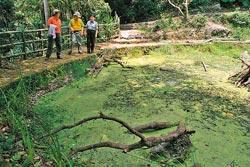 天溪園正在復育台灣水韭,光在小池畔就可以發現許多水生植物。