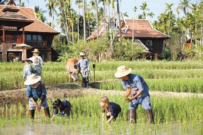 種田體驗活動讓大人小孩重回田野,也讓房客實際體驗清邁當地最主要的農作形式。黃麗如/攝影