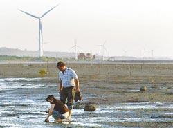 ▲西濱海岸的溼地可挖螃蟹、看風車,感受秋日閒情。攝影  范揚光