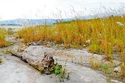 ▲大安溪河畔腹地很廣,也多濕軟泥地,行走要小心,也最好避開中午大太陽。攝影  陳志東