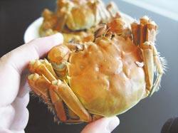 遠東飯店今天首賣的台產無毒大閘蟹,每隻足4兩重,售價1200元。攝影  王瑞瑤