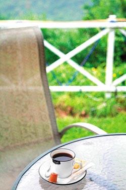 ▲秋天到了,咖啡也紅了。現在到台南關子嶺泡湯,喝杯新鮮的東山咖啡,感覺最悠閒。攝影  陳志東
