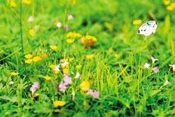 ▲綠地、花卉、昆蟲,原野草地就是美麗。攝影  陳志東