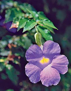 ▲步道沿途有美麗花兒為伴。攝影  楊智仁
