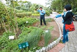▲農牧場有一處藥用植物園區,讓遊客認識各種抗蛇毒、抗癌、保肝的植物。攝影  陳志東