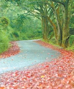 貓口蘭山步道不僅林木參天,初秋時分開始落下紅葉,寫意又詩意。