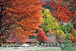 ▲秋天的中橫公路,不論武陵或福壽山,都像打翻的調色盤,色彩豐富。攝影  陳志東