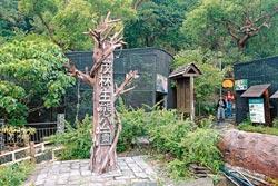 ▲茂林生態公園是民眾最輕鬆、容易接近紫斑蝶的園區。攝影  方濬哲