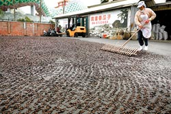 ▲台南麻豆寶達香瓜子已經三代經營,目前仍堅持以日曬方式製作瓜子。攝影  陳志東