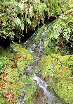 ▲巨木步道會經過清澈的溪流,高山泉水比礦泉水還清甜。攝影  陳怡誠