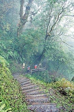 ▲檜山巨木步道非常平緩且沒有過度修繕,老少咸宜,連3歲的小朋友都可以勝任。攝影  陳怡誠