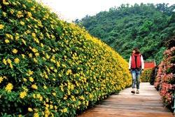 ▲花園迷宮以畢卡索名畫「夢」為藍圖放大4100倍,人在其中顯得渺小。攝影  王曉鈴
