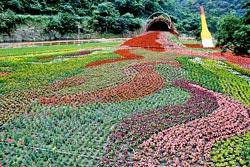 ▲傾洩花園以打翻顏料為意象,構成一幅美麗花海。攝影  王曉鈴