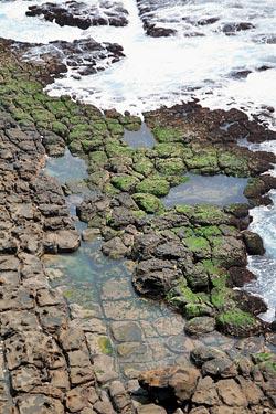 ▲鼻頭角豆腐岩地形精彩,猶如整齊切割的豆腐灑上海苔。攝影  王曉鈴