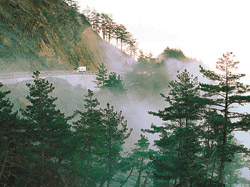 ▲福壽山農場出產的福壽長春茶,早年只供給總統府與國家送禮,這裡的天池還保留蔣公行館。攝影  陳志東