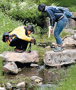 ▲老五民宿前有條清澈的生態溪,住客最喜在這兒流連忘返,回憶童年。攝影  姚志平