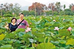 ▲夏天的白河蓮花盛開,7月底前賞花最壯觀。攝影  陳志東