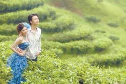 茶葉改良場魚池分場的茶園,目前已成南投縣新人拍攝婚紗的熱門景點。